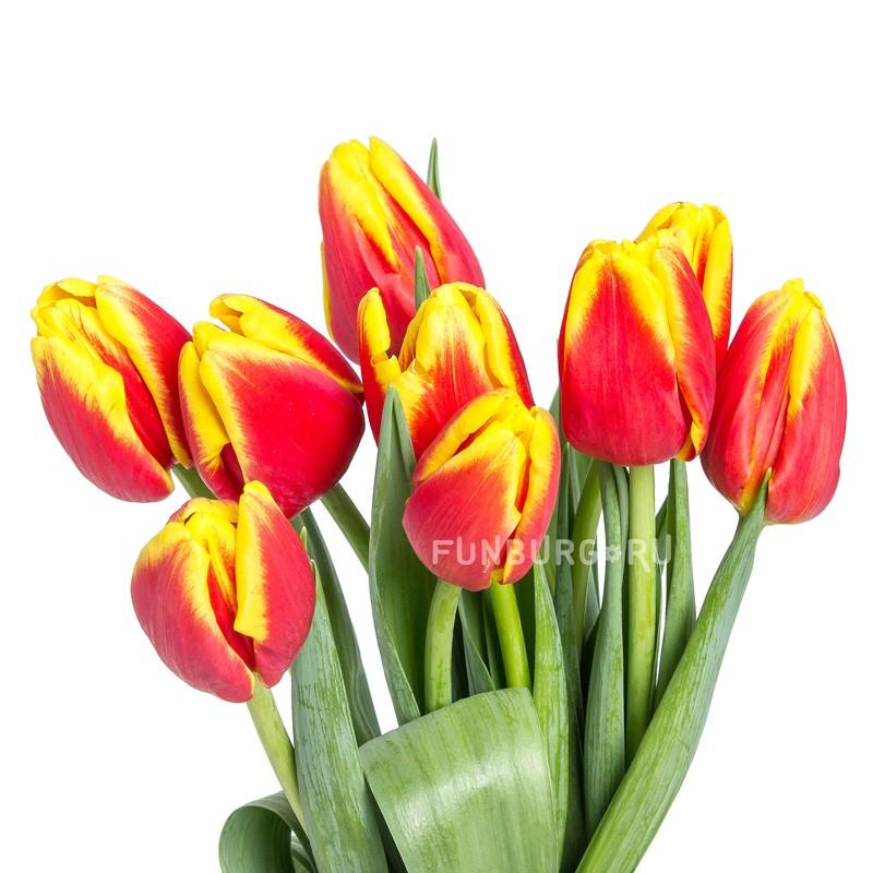 Красные с желтым тюльпаныЦветы<br><br> Состав:<br><br><br> красные с жёлтым тюльпаны, подвязанные лентой<br><br> <br>