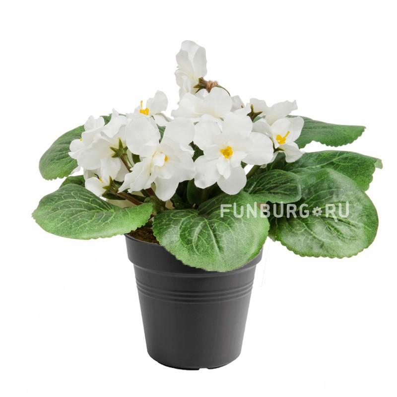 Горшечное растение «Фиалка»Цветущие растения<br> <br>Размеры:<br><br><br>Диаметр горшка 12 смВысота растения с горшком 25 см<br><br>