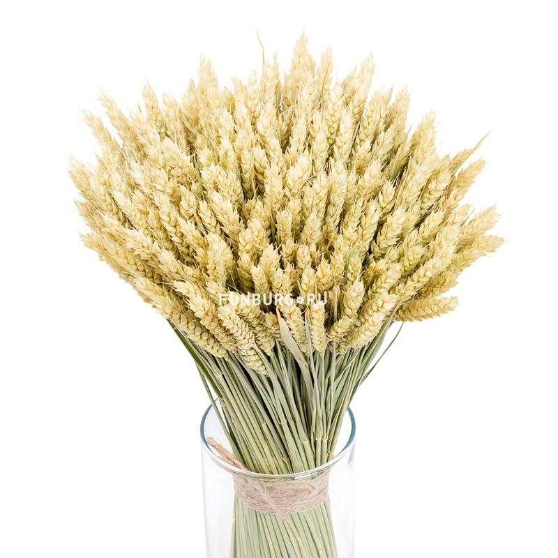 Пшеница  - купить со скидкой