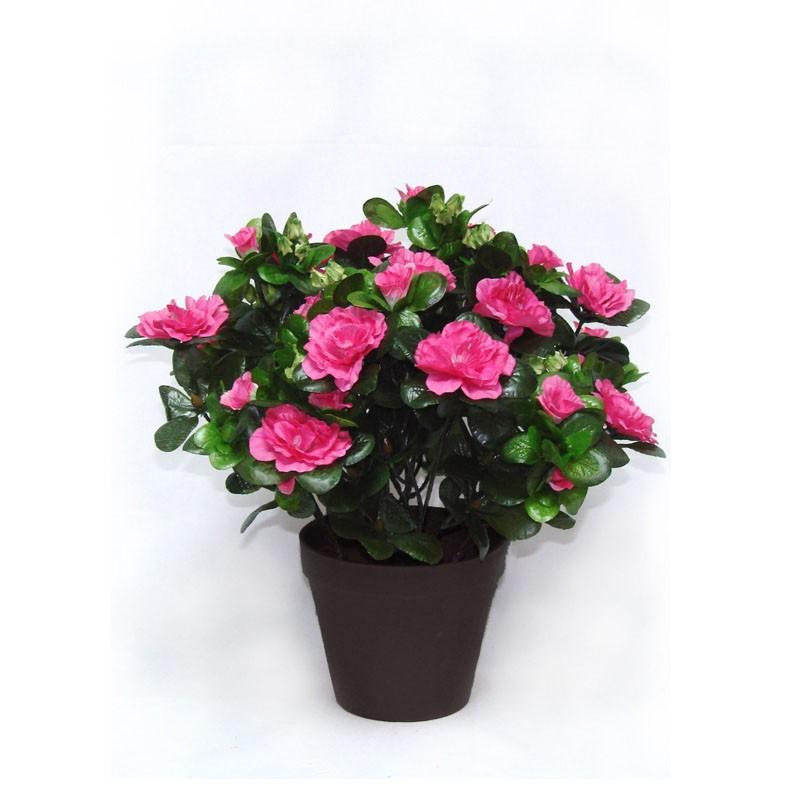 Горшечное растение «Азалия»Цветущие растения<br> <br>Размеры:<br><br><br>Диаметр горшка 12 смВысота растения с горшком 28 см<br><br>