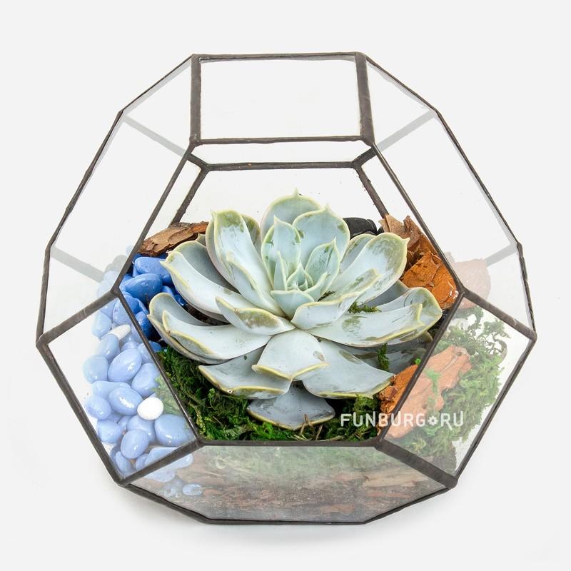 Флорариум №3Все композиции<br> <br>Состав:<br><br><br>флорариум, суккулент, земля, мох, кора, декор<br><br><br> <br>Размер:<br><br><br>ширина и высота 18 см<br><br>