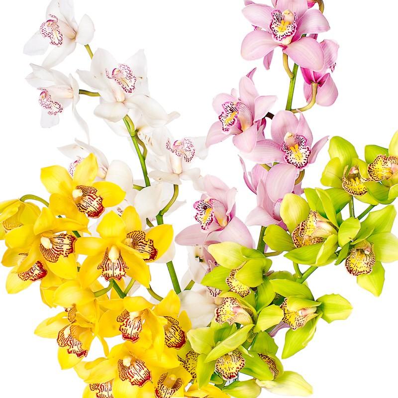 Орхидея (ветка)Цветы<br><br> Состав:<br><br><br> ветка орхидеи нужного Вам цвета<br> (в наличии белые, зеленые, розовые, жёлтые&amp;nbsp;и&amp;nbsp;др.)<br><br> <br>