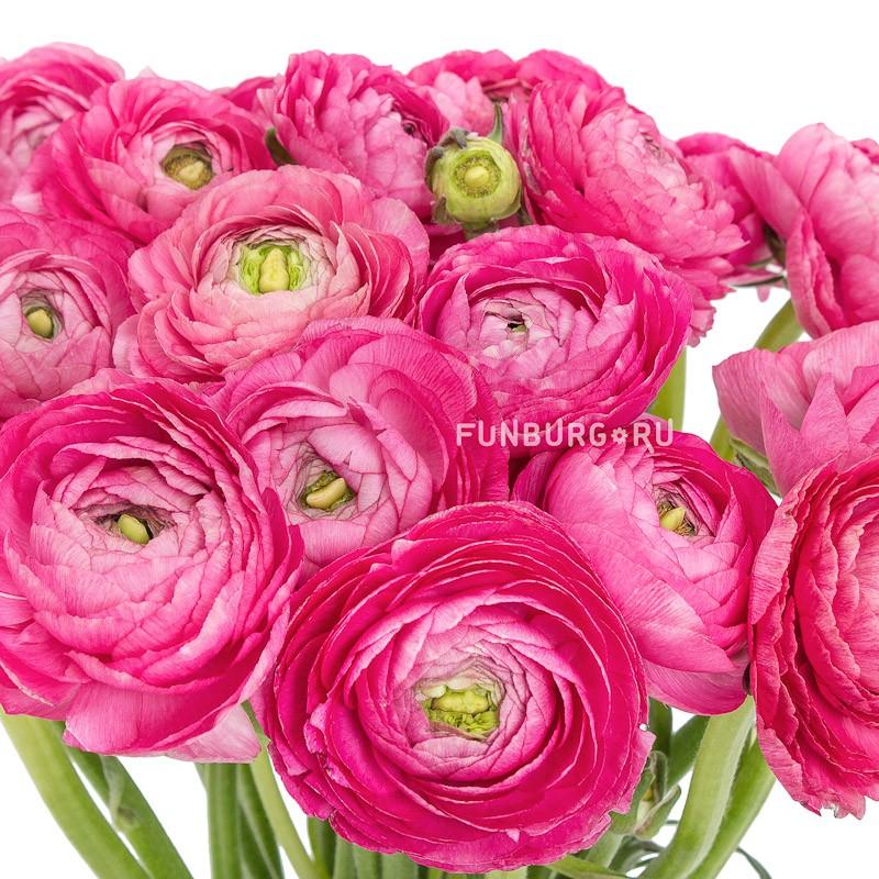 Цветы купить питер