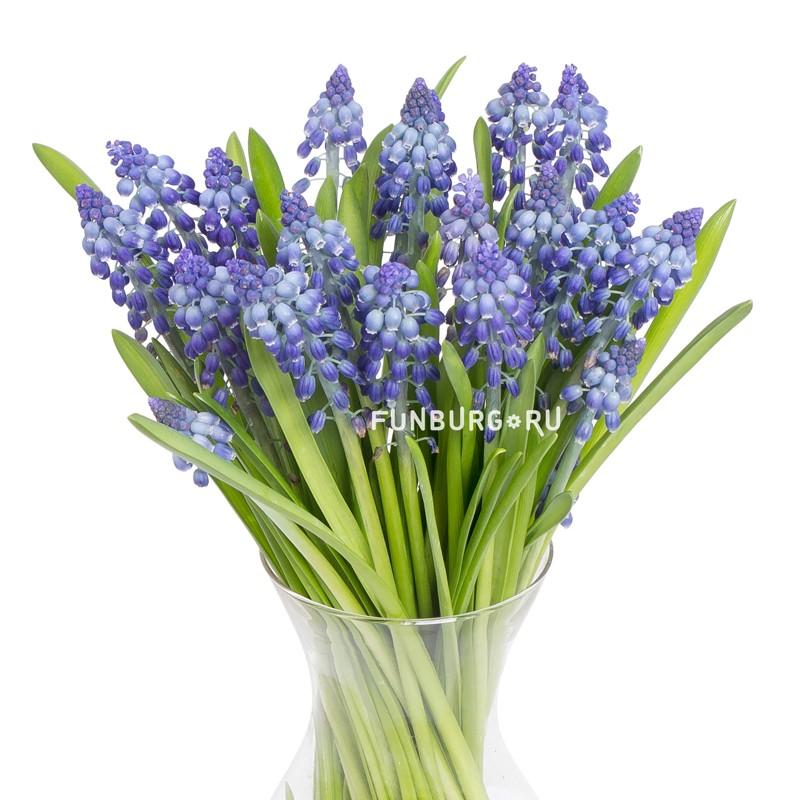 МускариЦветы<br><br>Мускари - сезонные цветы, поэтому они не всегда бывают в наличии!<br> Сезон у них длится с декабря по май. Цену и наличие вы всегда можете уточнить по телефону (343) 204-94-64.<br><br> <br>