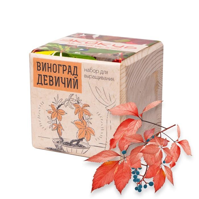 Экокуб «Девичий виноград»Эко-наборы<br> <br>Комплект:<br><br><br>деревянный горшочек, грунт, семена девичьего винограда, инструкция.<br><br><br> <br>Размер:<br><br><br>8?8?8 см<br><br><br> <br>Страна производитель:<br><br><br>Россия<br><br>