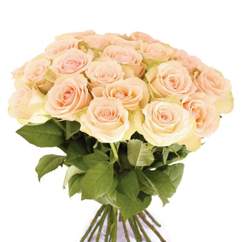 Чайные розыЦветы<br><br> Состав:<br><br><br> розы Эквадор/Голландия<br> длина стебля 60 см<br><br><br>