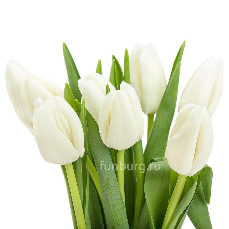 Белые тюльпаныЦветы<br><br> Состав:<br><br><br> тюльпаны белого цвета, подвязанные лентой<br><br> <br>