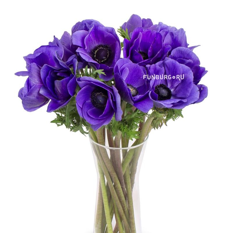 АнемоныЦветы<br><br>Анемоны - сезонные цветы, поэтому они не всегда бывают в наличии!<br> Сезон у анемонов длится с августа по май. Цену и наличие вы всегда можете уточнить по телефону (343) 204-94-64.<br><br>