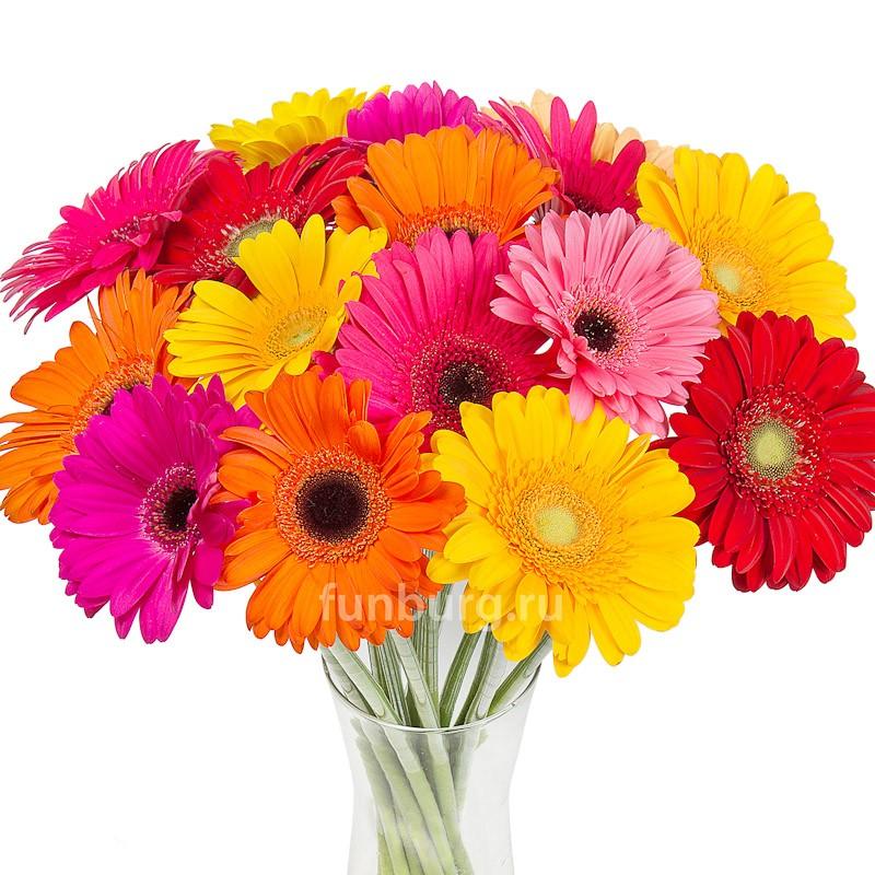 ГерберыЦветы<br><br> Состав:<br><br><br> герберы одного из возможных цветов (розовый, сиреневый, красный, оранжевый, жёлтый&amp;nbsp;и&amp;nbsp;др., либо ассорти)<br><br><br>