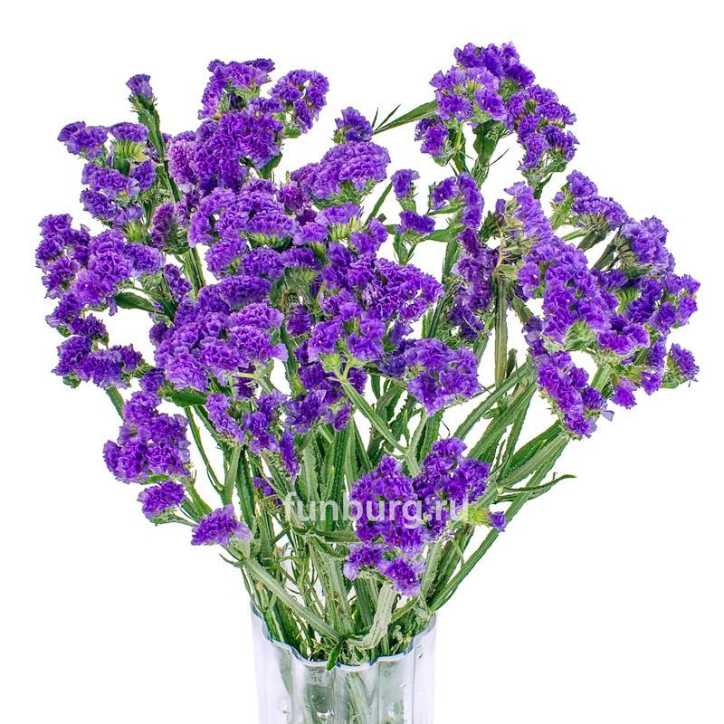 СтатицаЦветы<br><br> Состав:<br><br><br> статица сине-фиолетового, сиреневого, пурпурного, белого или жёлтого цвета<br><br> <br>